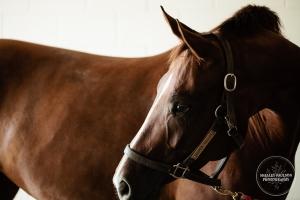 088_anoka-equine_2012
