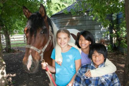 healing_horses